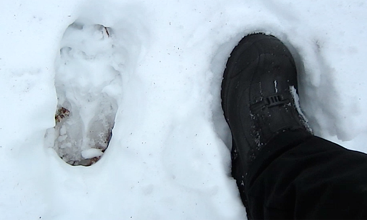 Moose Tracks in Woodford, Vermont